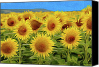 Botanicals Canvas Prints - Sunflowers in the Field Canvas Print by Jeff Kolker
