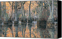 Cypress Knees Canvas Prints - Sunlight Through A Cypress Swamp Canvas Print by Medford Taylor