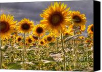 Clinton Photo Canvas Prints - Sunny Flower Day Canvas Print by David Bearden