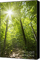 Hiking Canvas Prints - Sunny forest path Canvas Print by Elena Elisseeva