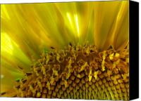 Flower Photograph Canvas Prints - Sunny Sunflower Canvas Print by Liz Vernand