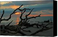 Driftwood Canvas Prints - Sunrise at Driftwood Beach 2.2 Canvas Print by Bruce Gourley