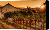Country Photographs Canvas Prints - Sunrise Harvest 4 Canvas Print by Mars Lasar