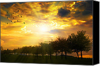 Lined Canvas Prints - Sunrise Over Tree Line Canvas Print by Christopher Elwell and Amanda Haselock