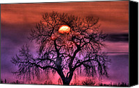 Idaho Canvas Prints - Sunrise Through The Foggy Tree Canvas Print by Scott Mahon