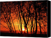 Saudi Canvas Prints - Sunrise Through the Trees Canvas Print by  Graham Taylor