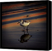 Beach Canvas Prints - Sunset And Bird Reflection Canvas Print by James Granberry