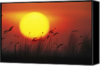 Hungary Canvas Prints - Sunset And Tall Grasses Canvas Print by Klaus Nigge