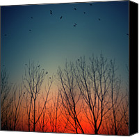 Flock Of Birds Canvas Prints - Sunset Behind Trees Canvas Print by Luis Mariano Gonzlez