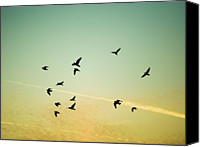 Flock Of Birds Canvas Prints - Sunset Birds Canvas Print by Sarah Palmer