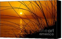 Vegetation Canvas Prints - Sunset Canvas Print by Carlos Caetano