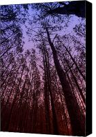 Canvas Wrap Canvas Prints - Sunset Forest Canvas Print by M K  Miller
