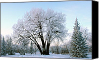 Steve Augustin Canvas Prints - Sunset Frost Canvas Print by Steve Augustin