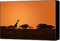 Lone Canvas Prints - Sunset Over Tarangire Canvas Print by Adam Romanowicz
