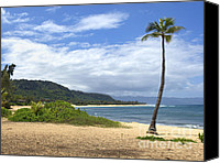 Surfers Canvas Prints - Sunset Point Palm Tree Canvas Print by Paul Topp