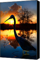 Herons Canvas Prints - Sunset Silhouette Canvas Print by Debra and Dave Vanderlaan
