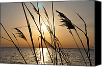 Tampa Digital Art Canvas Prints - Sunset Through the Dune Grass Canvas Print by Bill Cannon