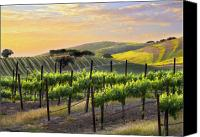 Vineyard  Canvas Prints - Sunset Vineyard Canvas Print by Sharon Foster
