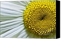 Flower Of Life Canvas Prints - Sunshine Daisy Canvas Print by Ryan Kelly