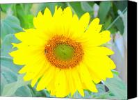 Amy Bradley Canvas Prints - Sunshine Flower Canvas Print by Amy Bradley