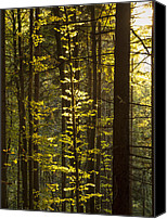 Forest Pyrography Canvas Prints - Sunshine Goodby Canvas Print by Dejan Burnik