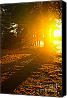 Forest Canvas Prints - Sunshine in evening forest near lake Canvas Print by Elena Elisseeva