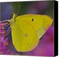 Flower Works Canvas Prints - Sunshine Wings Canvas Print by Debra     Vatalaro