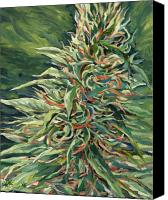 Bud Painting Canvas Prints - Super Silver Haze Canvas Print by Mary Jane