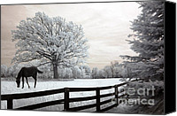 Surreal Landscape Canvas Prints - Surreal Fantasy Horse In Nature Landscape Canvas Print by Kathy Fornal