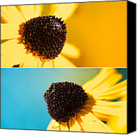 Floral Photo Canvas Prints - Susans Canvas Print by Lisa Knechtel