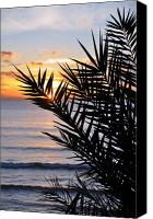 Beach Photograph Photo Canvas Prints - Swamis Palm Canvas Print by Kelly Wade