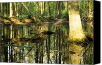 Ashland Canvas Prints - Swamps are Beautiful Too Canvas Print by Amanda Kiplinger