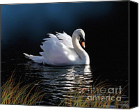 Blue Swan Canvas Prints - Swan Elegance Canvas Print by Robert Foster
