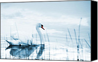 Wing Mirror Canvas Prints - Swan Canvas Print by Jaroslaw Grudzinski