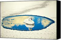 Blue Swan Canvas Prints - Swan Lake Canvas Print by Ernie Watchorn