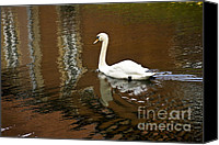 Beige Colours Canvas Prints - Swan Lake Canvas Print by Heiko Koehrer-Wagner
