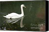 Beige Colours Canvas Prints - Swan on the Lake Canvas Print by Heiko Koehrer-Wagner