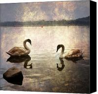 Lago Canvas Prints - swans on Lake Varese in Italy Canvas Print by Joana Kruse