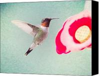 Ruby Throated Canvas Prints - Sweet Hummingbird Canvas Print by Al  Mueller