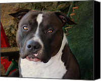 Pitbull Canvas Prints - Sweet Little Pitty Canvas Print by Larry Marshall