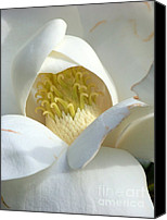 Tree Blossoms Canvas Prints - Sweet Magnolia Canvas Print by Karen Wiles
