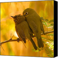 Little Birds Canvas Prints - Sweet nothings Canvas Print by Alistair Lyne