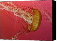 Sea Aquatic Canvas Prints - Swimming Jelly Canvas Print by Vijay Sharon Govender