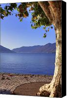 Solitude Canvas Prints - sycamore tree at the Lake Maggiore Canvas Print by Joana Kruse
