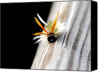 Insect Photography Canvas Prints - Sycamore Tussock Moth Canvas Print by Skip Willits