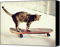Turkey Photo Canvas Prints - Tabby Cat On Skateboard Canvas Print by Hulya Ozkok