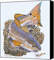 Gag Grouper Canvas Prints - Tailing Redfish Canvas Print by Carey Chen