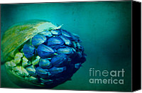 Close Up Special Promotions - Take Me As I Am Canvas Print by Catherine Fenner