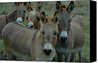 Donkey Mixed Media Canvas Prints - Take our picture please Canvas Print by Bill Willemsen