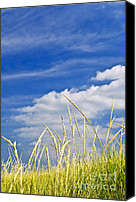 Countryside Photo Canvas Prints - Tall grass on sand dunes Canvas Print by Elena Elisseeva
